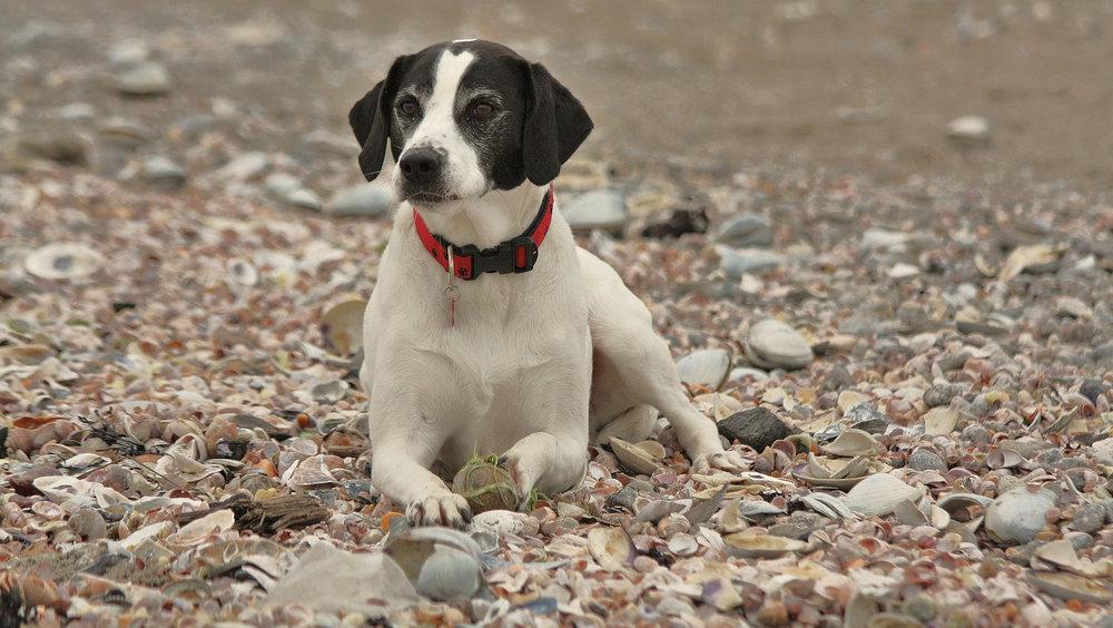 "Snoopy: exploring the post-Katrina ""wrack"""