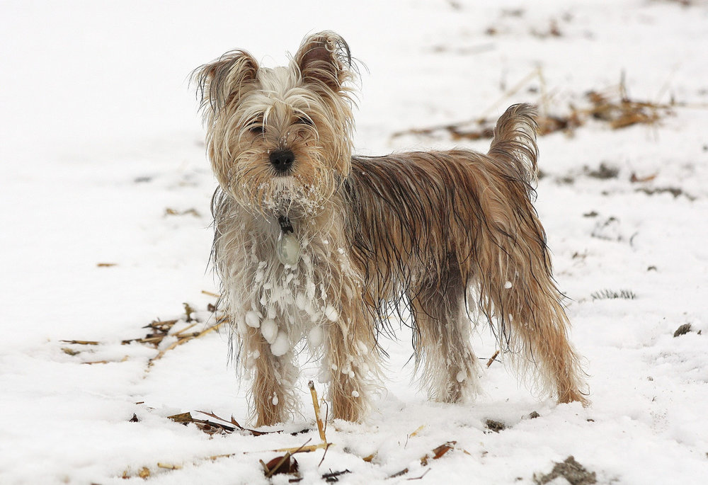 Yukon: frozen fun... !