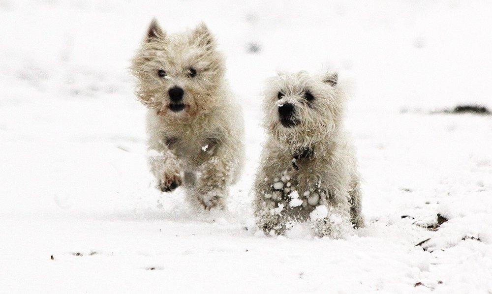 Mina & Pippin: joyfully ignoring the bitter cold...