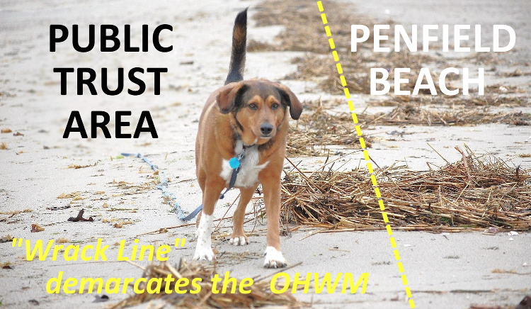 Danny: deftly straddling a legitimate off-leash outing on Penfield Beach...