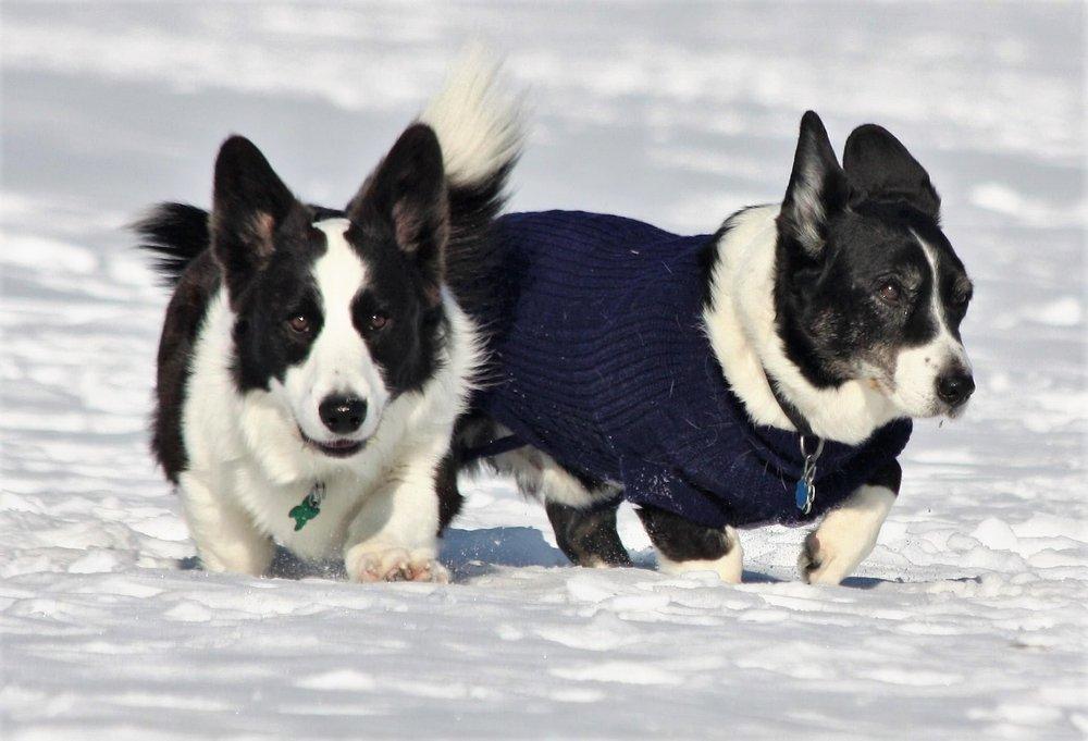 P.D. & Guinness: frosty explorers...