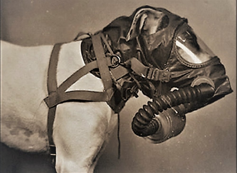 1940s canine gas mask