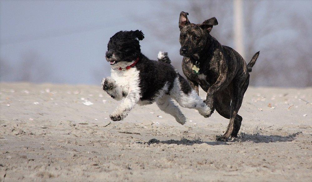 Cappy & Zoe: ridge racers...