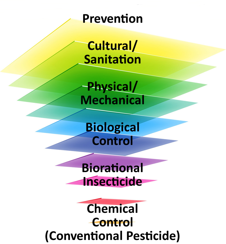 ipm triangle-1png.png