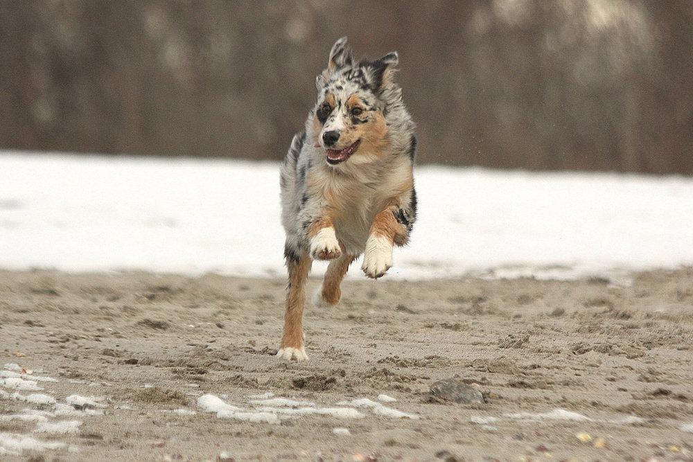 Harley: winter sportsman...