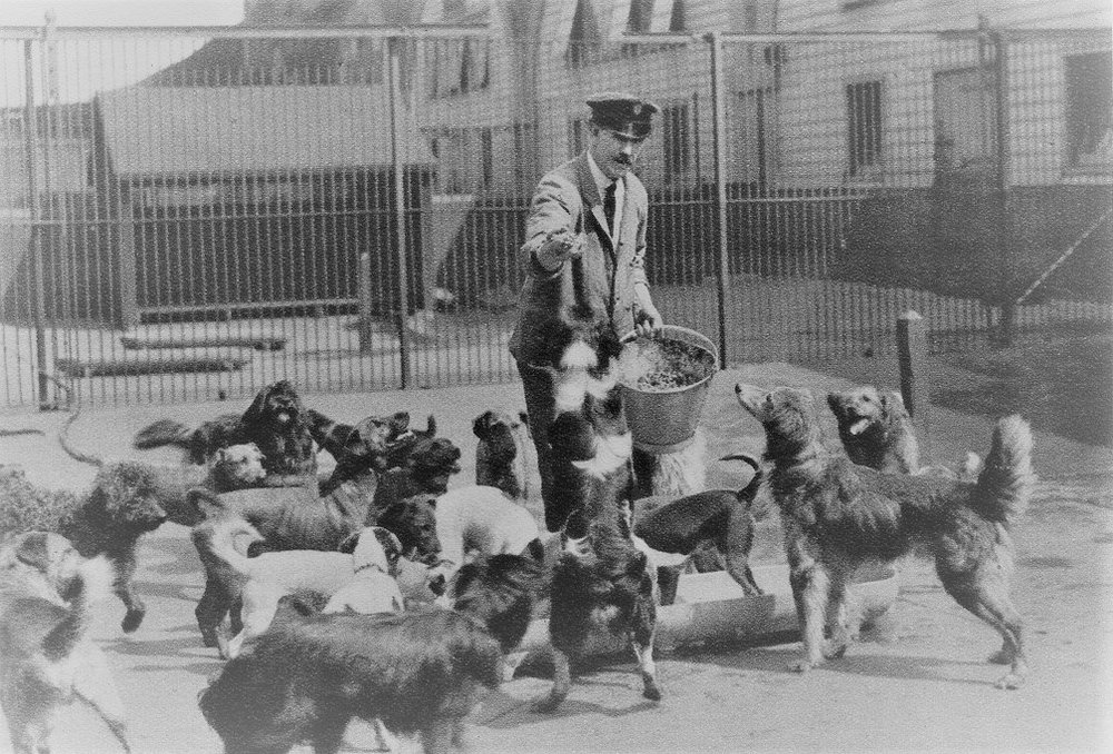 The Battersea (UK) Home for Dogs in the 1920s
