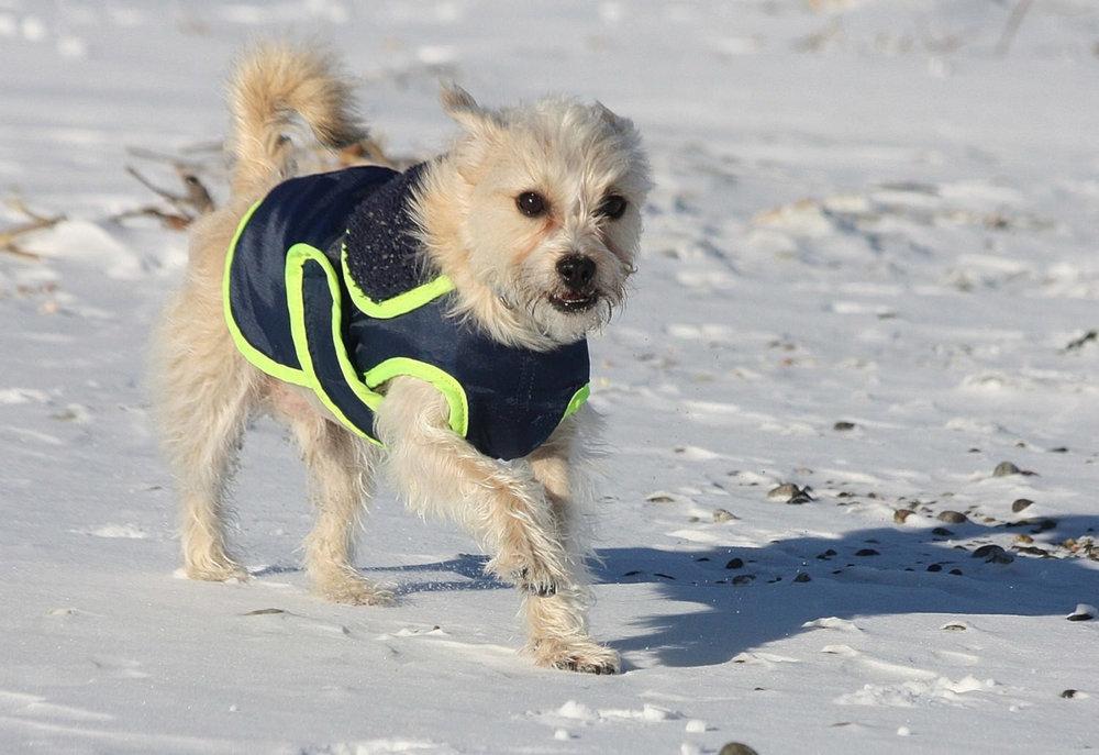 Emmet: frosty adventurer
