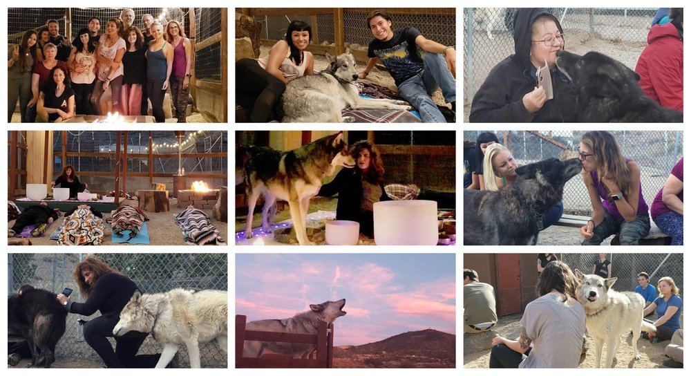 wolfcollage2019.jpg
