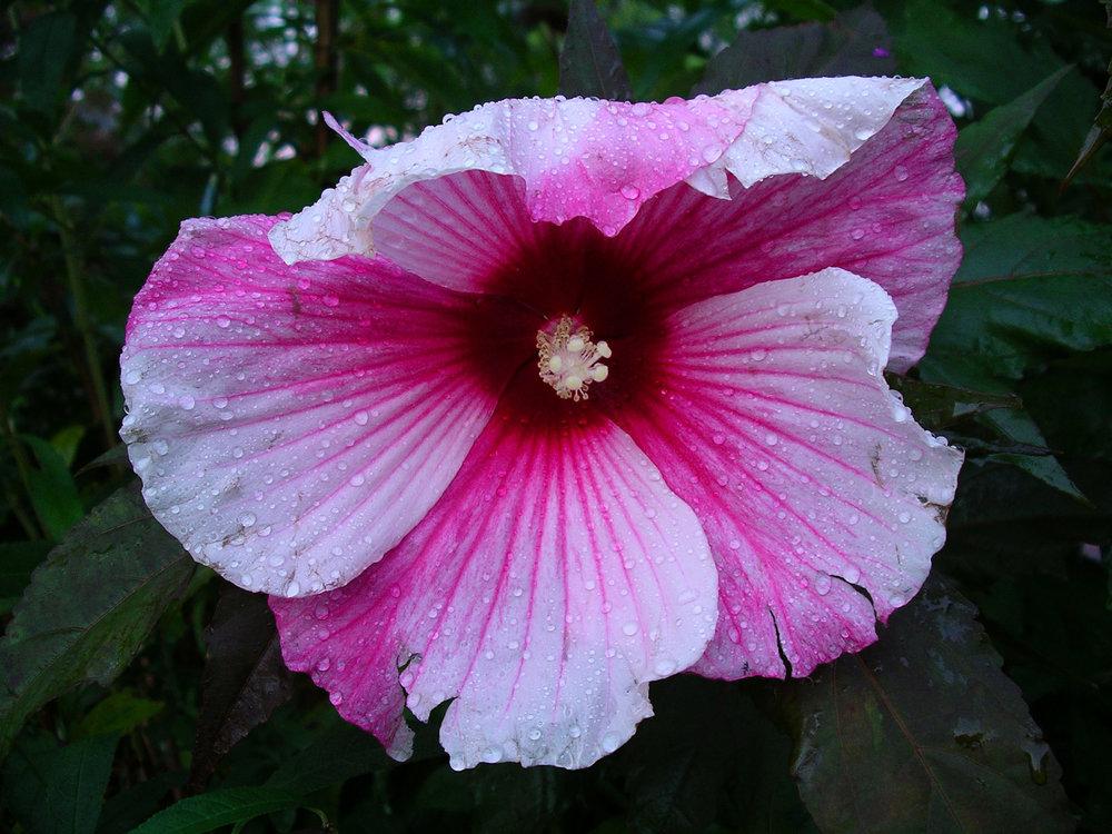 Flora - Color -