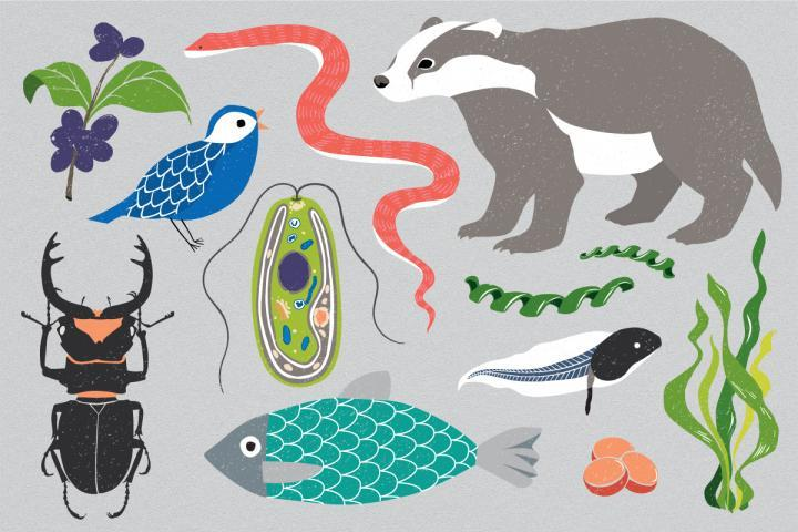 The Earth BioGenome Project aims to sequence all eukaryotic species. This superkingdom of life includes all organisms except bacteria and archaea.