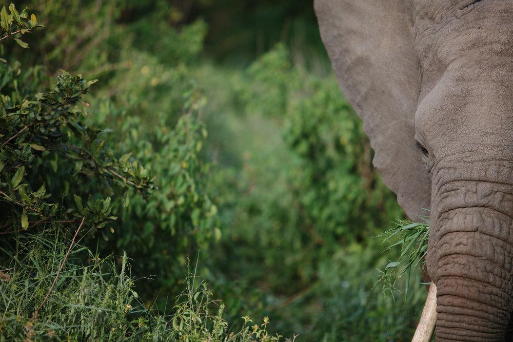 Serengeti-3.jpg