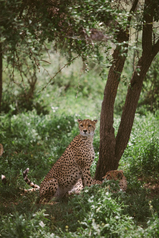 Serengeti-11.jpg