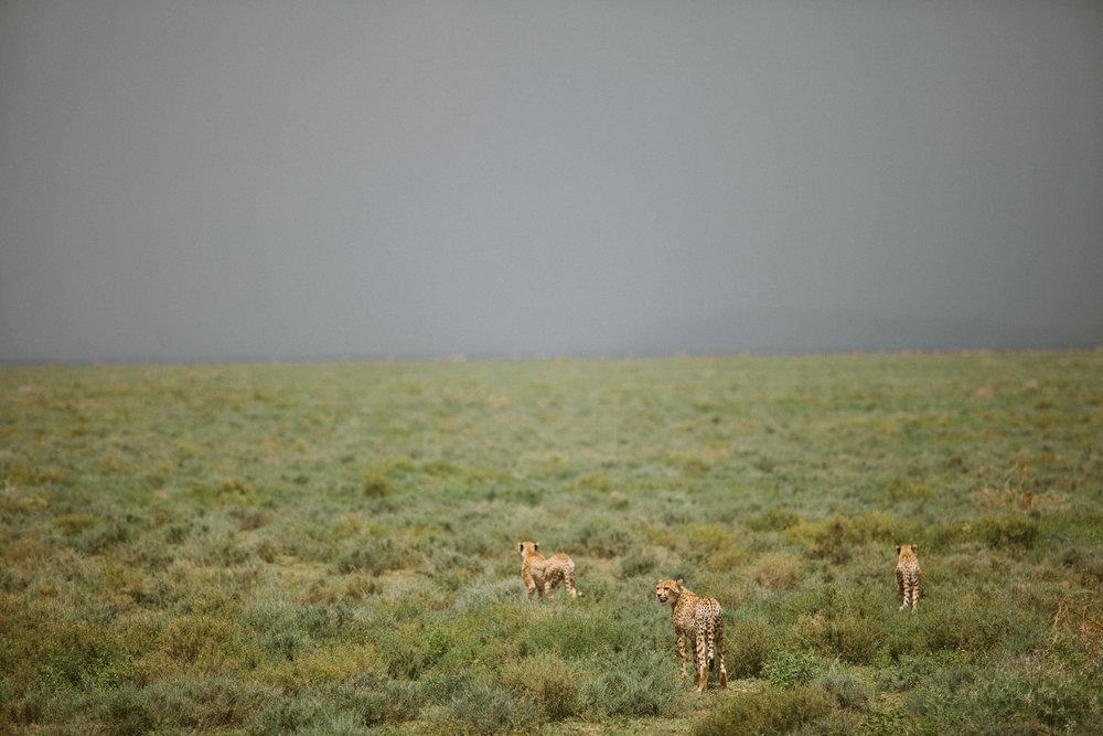 Serengeti-14.jpg
