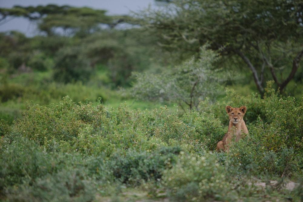 Serengeti-19.jpg