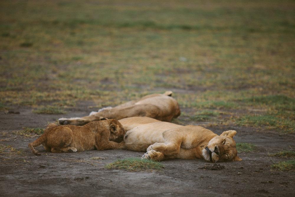 Serengeti-22.jpg