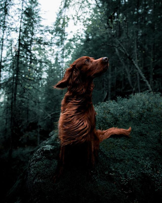 Not all heroes wear capes.⠀ 📷 @george_and_troja⠀ ⠀ ⠀ #mansbestfriend #campingwithdogs #dogsofinsta #dogsarefamily #portraitmode #moodyports #dogphotography #thegreatoutdoors #justgoshoot #natureverse #explorers