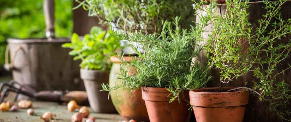 Spring-Herbs.jpg