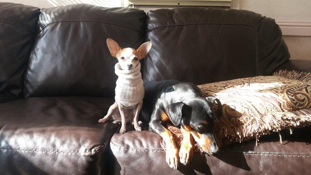 Art dogs: little Peanut and Kassat.