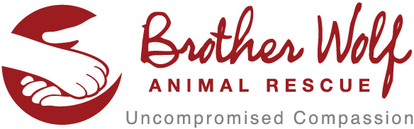Copy of Brother Wolf Animal Rescue