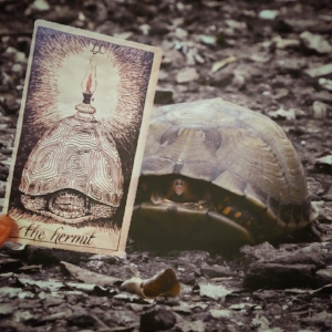 turtle_hermit.JPG