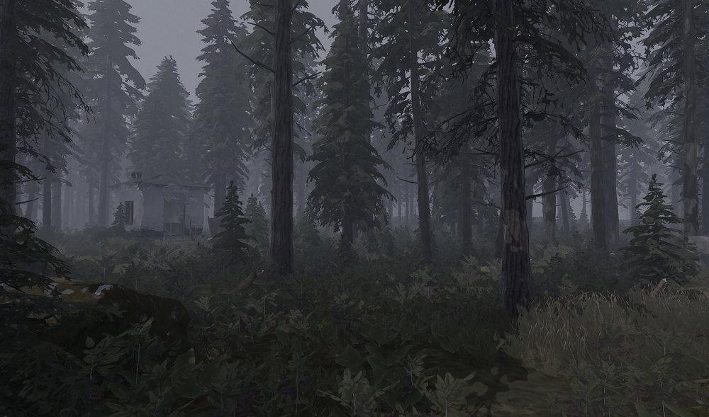 forest_005b.jpg