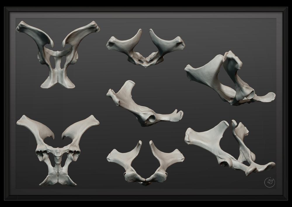 Horse_Bones.png
