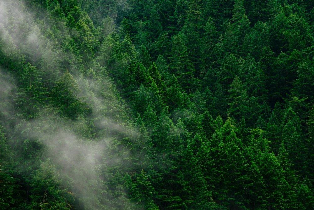 Organice & gestione su proceso de  Carbono Neutralidad  de manera:  online ,  confiable  y  económica.