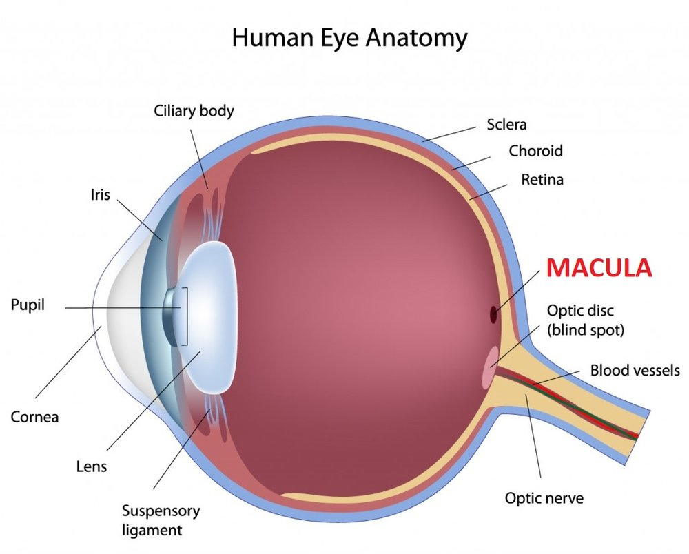 Age Related Macular Degeneration Macucheck