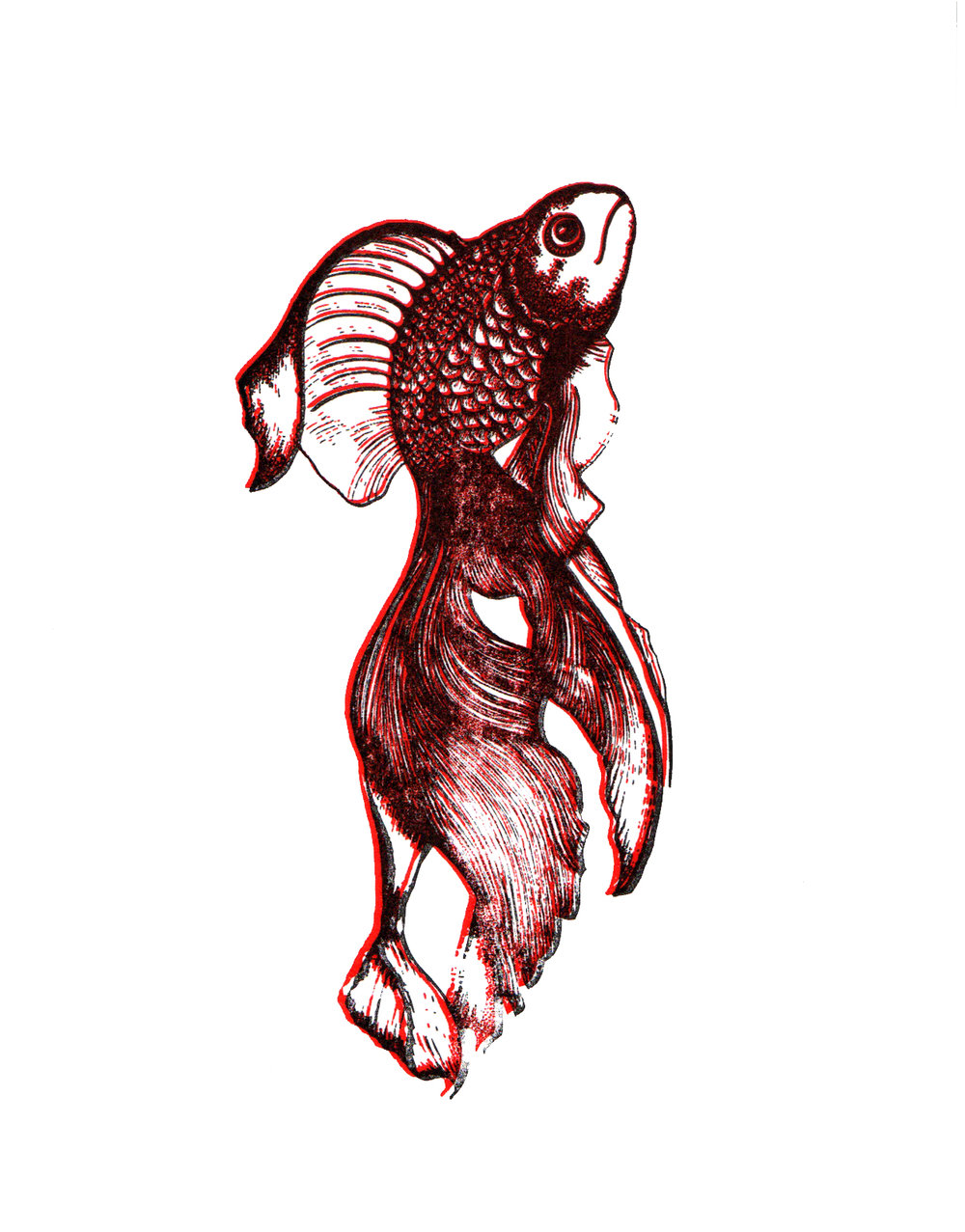 Fighting Fish Print