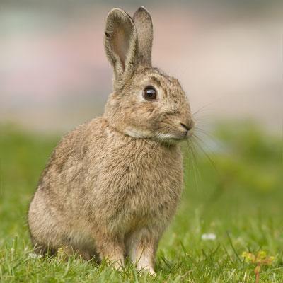Rabbits -