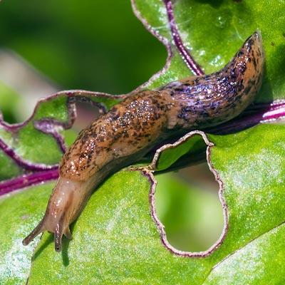 Slugs & Snails -