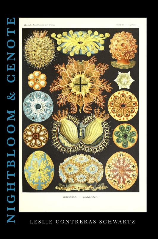 Nightbloom & Cenote - Leslie Contreras Schwartz