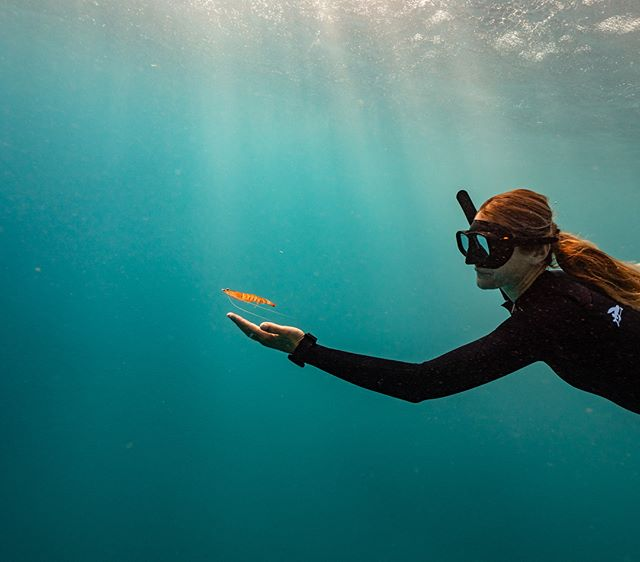 You wouldn't read about it, @nushfreedman had a prawn friend follow her around while freediving off exmouth, it was literally swimming up and sitting in her hand. @aquatech_imagingsolutions @hecsaquatic @vagabondphotographic #prawn #justanotherdayinwa #coralcoast #exmouth #freediving