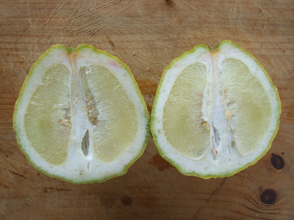 large-citrus-cut.jpg