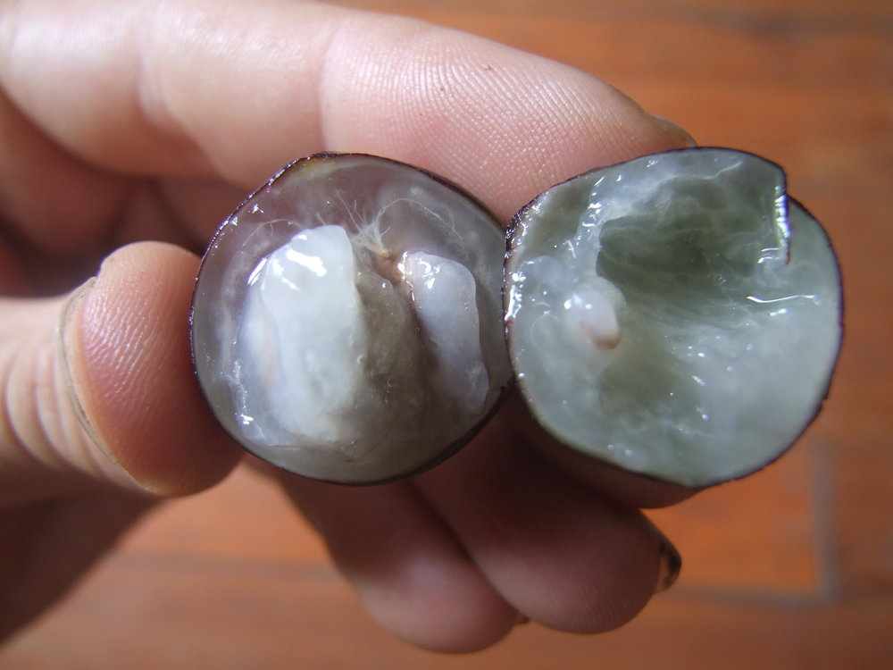 Jaboticaba fruit close-up, cross-section