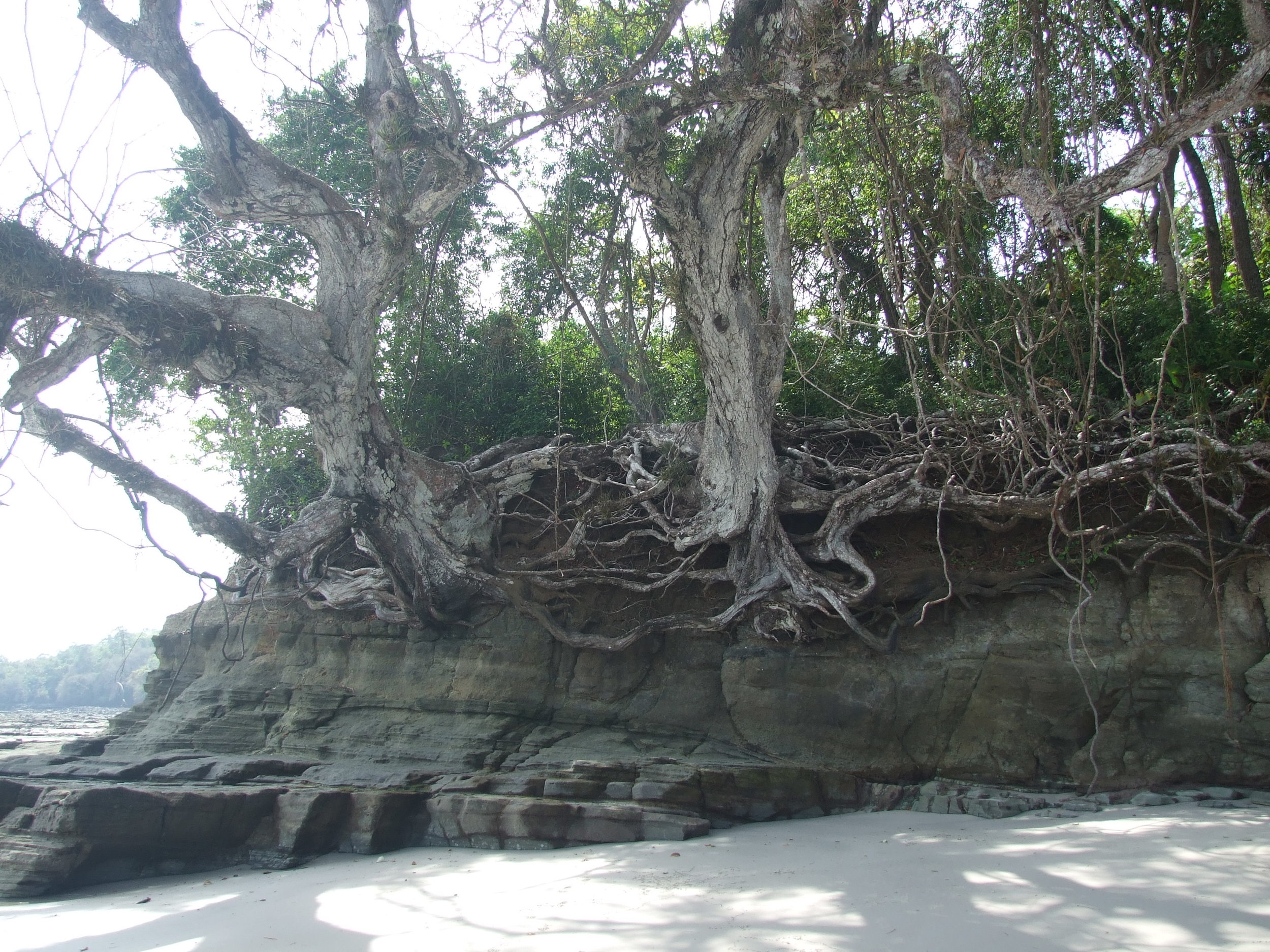trees-on-beach