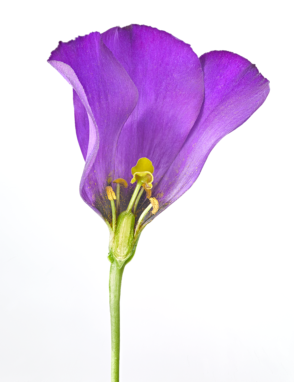 Cross section of a flower. Photography by  Gary Ombler  for DK.