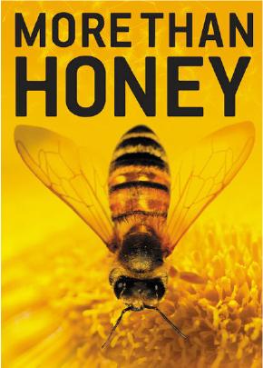 Bildergebnis für more than honey