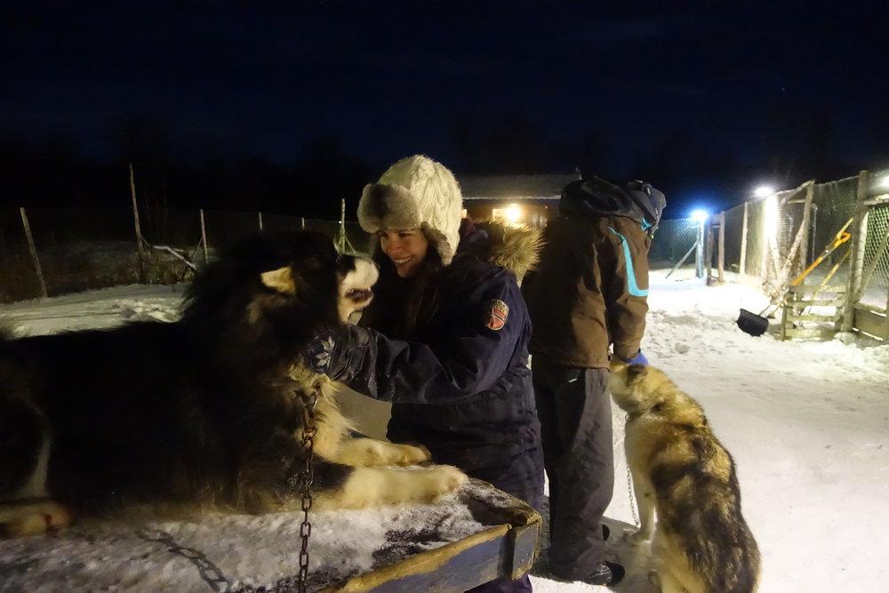 Besøk i hundegården,Lære om polarhunder, kos, børsting, mating,....JPG
