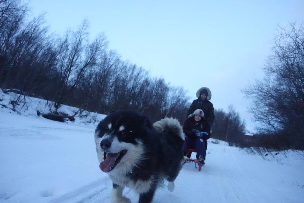 Tur med spark og polarhund.JPG