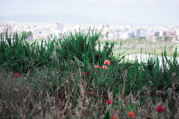 Greece2-106.jpg