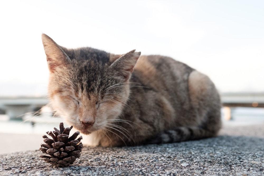 Nicholas' Okinawa Cats Special
