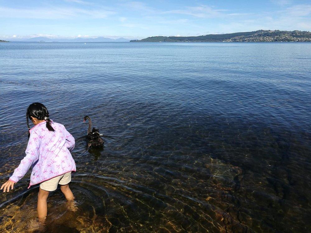 Lake Taupo, Shino and the swan by Jesse Whitehead of  Ryukyucam