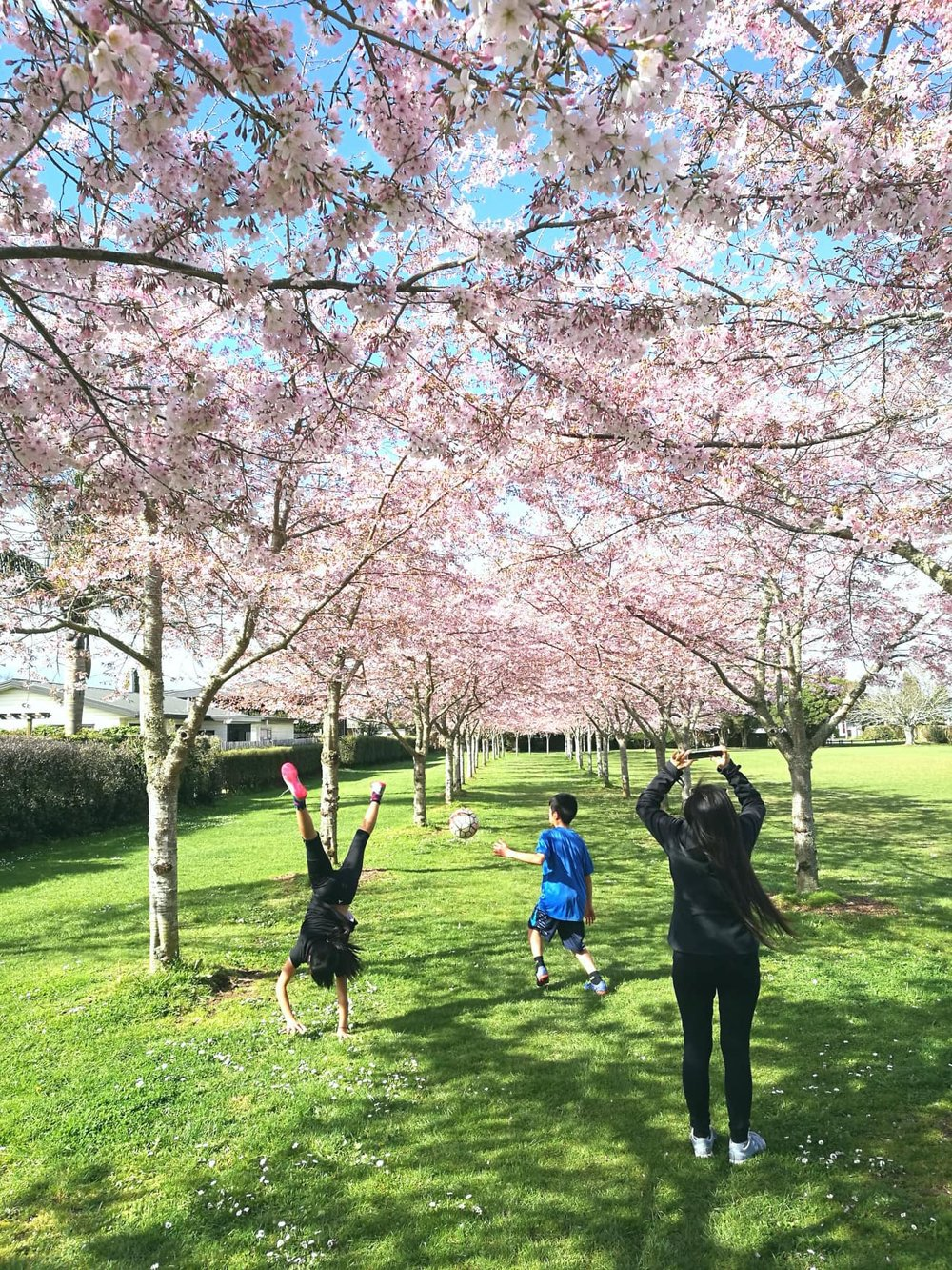 Hamilton's cherry blossoms and happy family by Jesse Whitehead of  Ryukyucam