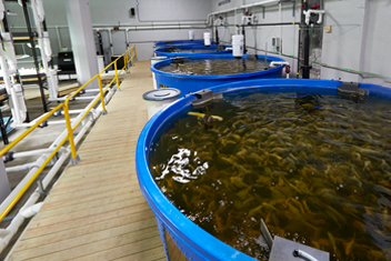Recirculating aquaculture facility, Minnesota.