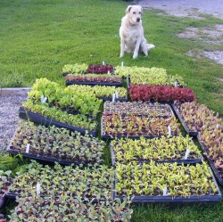 seedlings to plant