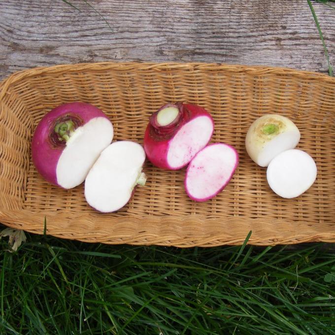 3 kinds turnips
