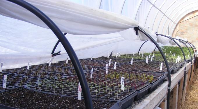 150317 seedlings full bench