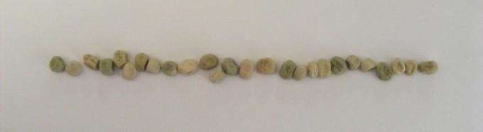 150318 pea seed