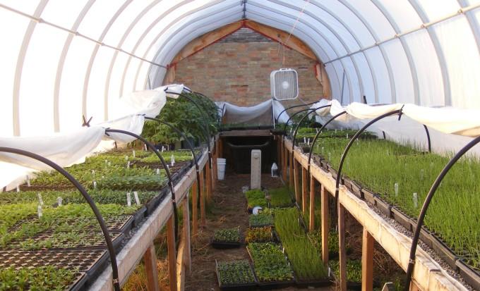 150411 seedling greenhouse